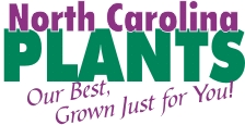 North Carolina Plants ~ Our Best, Just for You!